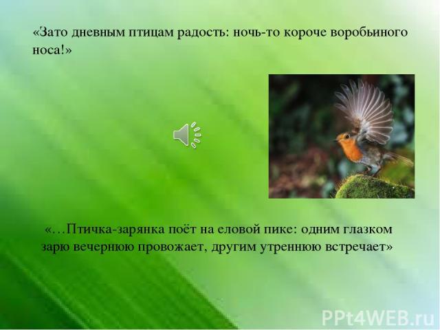 «Зато дневным птицам радость: ночь-то короче воробьиного носа!» «…Птичка-зарянка поёт на еловой пике: одним глазком зарю вечернюю провожает, другим утреннюю встречает»