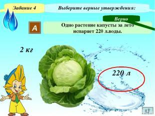 Задание 4 Выберите верные утверждения: В Одно растение капусты за лето пропускае