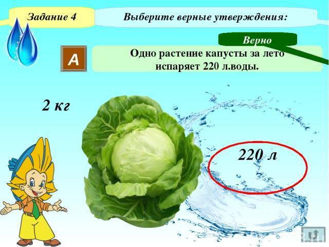 Задание 4 Выберите верные утверждения: В Одно растение капусты за лето пропускает 110000 л воды. Неверно 99,8% - 220 л 220,44 (л) По тексту: …Остальные 99,8 % воды тратится на испарение. 100% - ? 220 : 99,6 · 100 ~ ~ Для визуализации правильного отв…