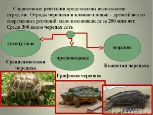 Современные рептилии представлены несколькими отрядами. Отряды черепахи и клювог