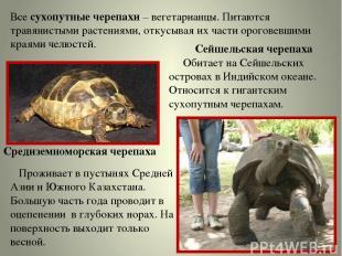 Все сухопутные черепахи – вегетарианцы. Питаются травянистыми растениями, откусы
