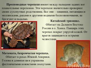 Пресноводные черепахи имеют между пальцами задних ног плавательные перепонки. Эт