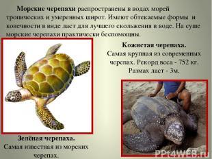 Морские черепахи распространены в водах морей тропических и умеренных широт. Име