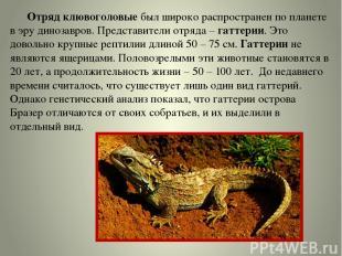 Отряд клювоголовые был широко распространен по планете в эру динозавров. Предста
