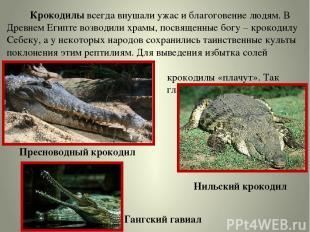 Крокодилы всегда внушали ужас и благоговение людям. В Древнем Египте возводили х
