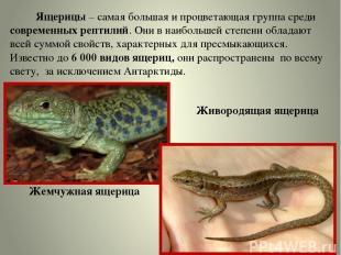 Ящерицы – самая большая и процветающая группа среди современных рептилий. Они в