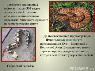Семейство гадюковых включает около 300 видов ядовитых змей. Гадюки обладают вели