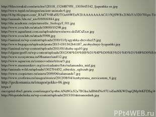 http://files.torakid.com/articles/120118_1326887951_1303645342_ljagushka-oz.jpg