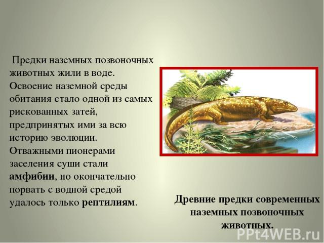 Предки наземных позвоночных животных жили в воде. Освоение наземной среды обитания стало одной из самых рискованных затей, предпринятых ими за всю историю эволюции. Отважными пионерами заселения суши стали амфибии, но окончательно порвать с водной с…