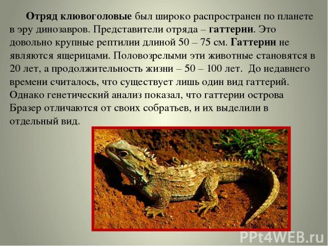 Отряд клювоголовые был широко распространен по планете в эру динозавров. Представители отряда – гаттерии. Это довольно крупные рептилии длиной 50 – 75 см. Гаттерии не являются ящерицами. Половозрелыми эти животные становятся в 20 лет, а продолжитель…