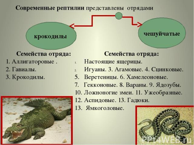 Современные рептилии представлены отрядами крокодилы чешуйчатые Семейства отряда: 1. Аллигаторовые . 2. Гавиалы. 3. Крокодилы. Семейства отряда: Настоящие ящерицы. Игуаны. 3. Агамовые. 4. Сцинковые. 5. Веретеницы. 6. Хамелеоновые. 7. Гекконовые. 8. …