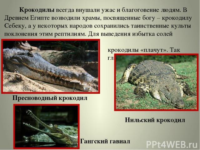 Крокодилы всегда внушали ужас и благоговение людям. В Древнем Египте возводили храмы, посвященные богу – крокодилу Себеку, а у некоторых народов сохранились таинственные культы поклонения этим рептилиям. Для выведения избытка солей крокодилы «плачут…