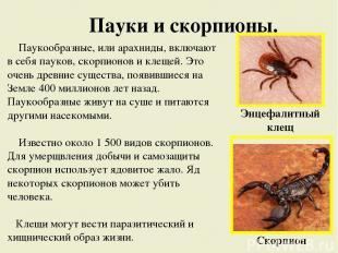 Пауки и скорпионы. Паукообразные, или арахниды, включают в себя пауков, скорпион