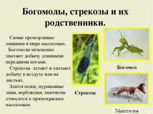 Богомолы, стрекозы и их родственники. Самые прожорливые хищники в мире насекомых