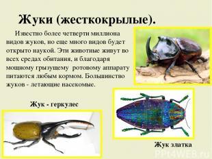 Жуки (жесткокрылые). Известно более четверти миллиона видов жуков, но еще много