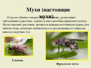 Мухи (настоящие мухи). . О мухах обычно говорят как о нечистых, разносящих забол