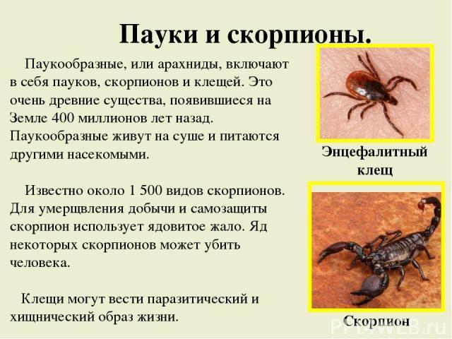 Пауки и скорпионы. Паукообразные, или арахниды, включают в себя пауков, скорпионов и клещей. Это очень древние существа, появившиеся на Земле 400 миллионов лет назад. Паукообразные живут на суше и питаются другими насекомыми. Известно около 1 500 ви…