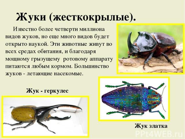Жуки (жесткокрылые). Известно более четверти миллиона видов жуков, но еще много видов будет открыто наукой. Эти животные живут во всех средах обитания, и благодаря мощному грызущему ротовому аппарату питаются любым кормом. Большинство жуков - летающ…