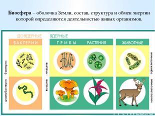 Биосфера – оболочка Земли, состав, структура и обмен энергии которой определяютс