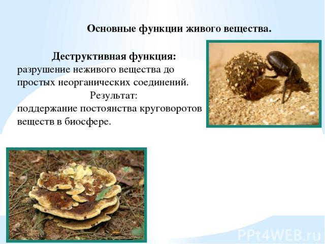 Основные функции живого вещества. Деструктивная функция: разрушение неживого вещества до простых неорганических соединений. Результат: поддержание постоянства круговоротов веществ в биосфере.