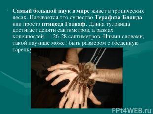 Самый большой паук в мире живет в тропических лесах. Называется это существо Тер