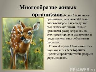 Многообразие живых организмов. На планете более 5 млн видов организмов, не менее