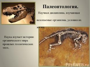 Палеонтология. Научная дисциплина, изучающая ископаемые организмы, условия их жи