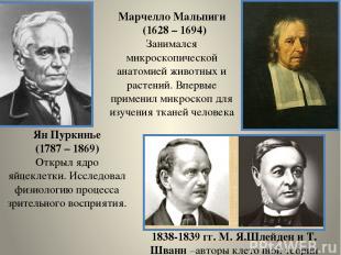 Ян Пуркинье (1787 – 1869) Открыл ядро яйцеклетки. Исследовал физиологию процесса
