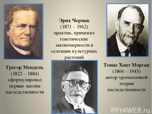 Грегор Мендель (1822 – 1884) сформулировал первые законы наследственности Томас