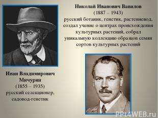 Иван Владимирович Мичурин (1855 – 1935) русский селекционер, садовод-генетик Ник