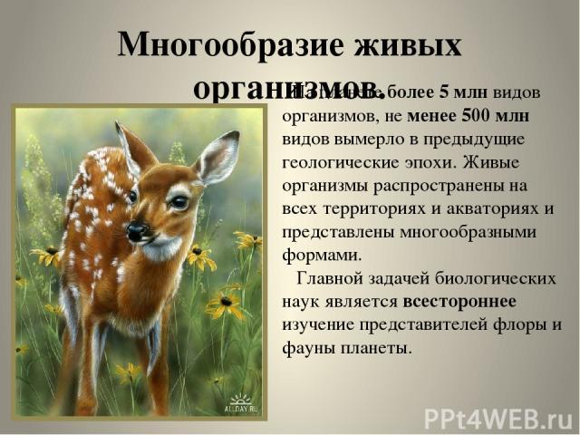 Многообразие живых организмов. На планете более 5 млн видов организмов, не менее 500 млн видов вымерло в предыдущие геологические эпохи. Живые организмы распространены на всех территориях и акваториях и представлены многообразными формами. Главной з…