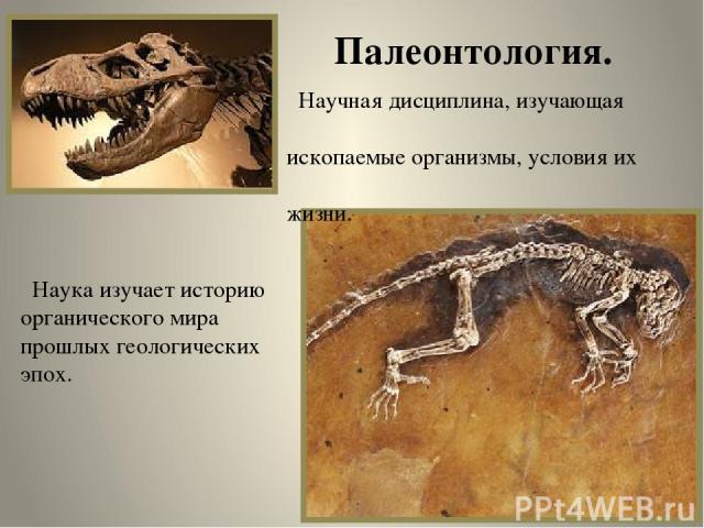 Палеонтология. Научная дисциплина, изучающая ископаемые организмы, условия их жизни. Наука изучает историю органического мира прошлых геологических эпох.