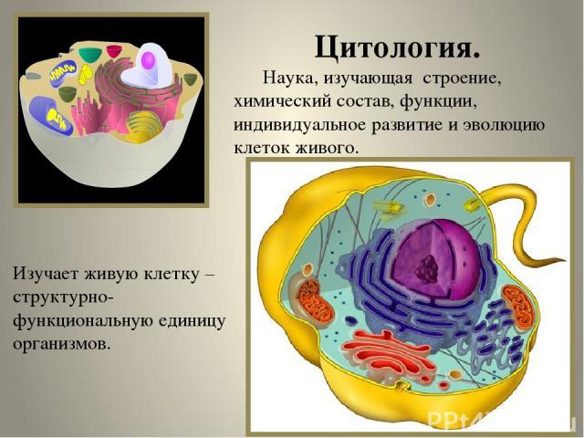 Цитология. Наука, изучающая строение, химический состав, функции, индивидуальное развитие и эволюцию клеток живого. Изучает живую клетку – структурно-функциональную единицу организмов.