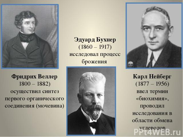 Фридрих Веллер 1800 – 1882) осуществил синтез первого органического соединения (мочевина) Эдуард Бухнер (1860 – 1917) исследовал процесс брожения Карл Нейберг (1877 – 1956) ввел термин «биохимия», проводил исследования в области обмена углеводов