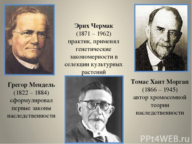Грегор Мендель (1822 – 1884) сформулировал первые законы наследственности Томас Хант Морган (1866 – 1945) автор хромосомной теории наследственности Эрих Чермак (1871 – 1962) практик, применял генетические закономерности в селекции культурных растений