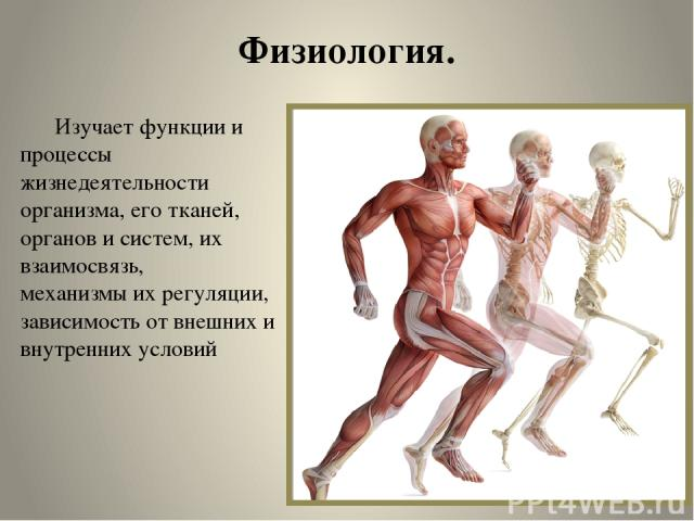 Физиология. Изучает функции и процессы жизнедеятельности организма, его тканей, органов и систем, их взаимосвязь, механизмы их регуляции, зависимость от внешних и внутренних условий