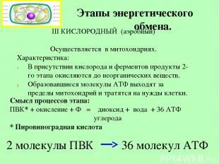 Этапы энергетического обмена. III КИСЛОРОДНЫЙ (аэробный) Осуществляется в митохо