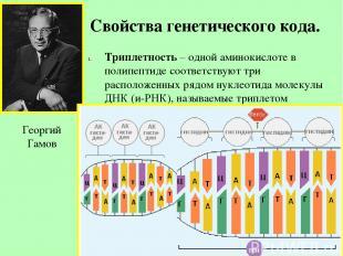 Свойства генетического кода. Триплетность – одной аминокислоте в полипептиде соо