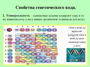 Свойства генетического кода. 2. Универсальность – одинаковые кодоны кодируют одн