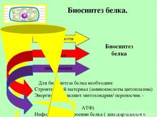 Биосинтез белка. Биосинтез белка аминокислоты энергия информация Для биосинтеза