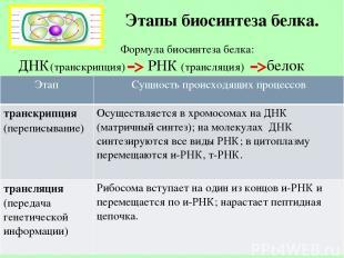 Этапы биосинтеза белка. Формула биосинтеза белка: ДНК(транскрипция) РНК (трансля