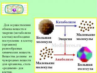 Для осуществления обмена веществ и энергии (метаболизм клетки) необходимо поступ