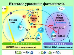 Итоговое уравнение фотосинтеза.