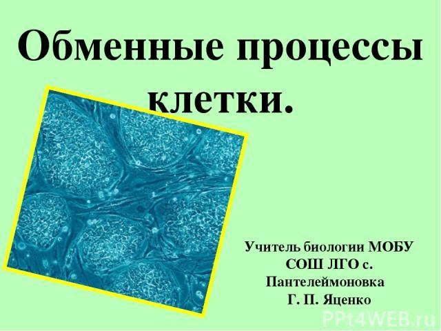 Обменные процессы клетки. Учитель биологии МОБУ СОШ ЛГО с. Пантелеймоновка Г. П. Яценко
