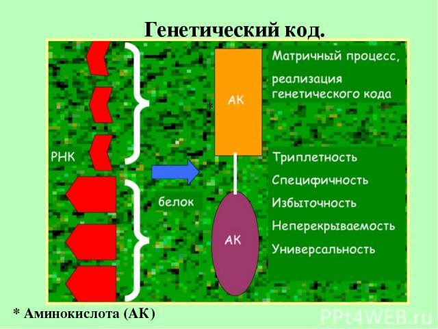 Генетический код. * * Аминокислота (АК)