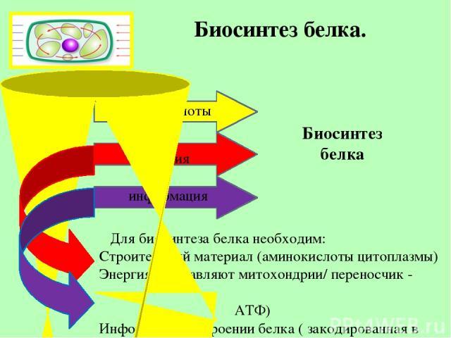 Биосинтез белка. Биосинтез белка аминокислоты энергия информация Для биосинтеза белка необходим: Строительный материал (аминокислоты цитоплазмы) Энергия (поставляют митохондрии/ переносчик - АТФ) Информация о строении белка ( закодированная в гене –…