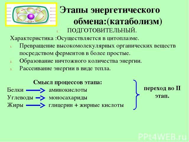 Этапы энергетического обмена:(катаболизм) ПОДГОТОВИТЕЛЬНЫЙ. Характеристика :Осуществляется в цитоплазме. Превращение высокомолекулярных органических веществ посредством ферментов в более простые. Образование ничтожного количества энергии. Рассеивани…