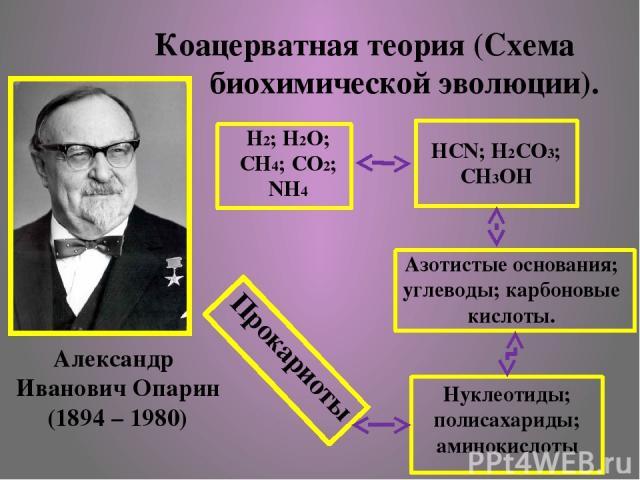 Коацерватная теория (Схема биохимической эволюции). Н2; Н2О; СН4; СО2; NH4 HCN; H2CO3; CH3OH Азотистые основания; углеводы; карбоновые кислоты. Нуклеотиды; полисахариды; аминокислоты Прокариоты Александр Иванович Опарин (1894 – 1980)