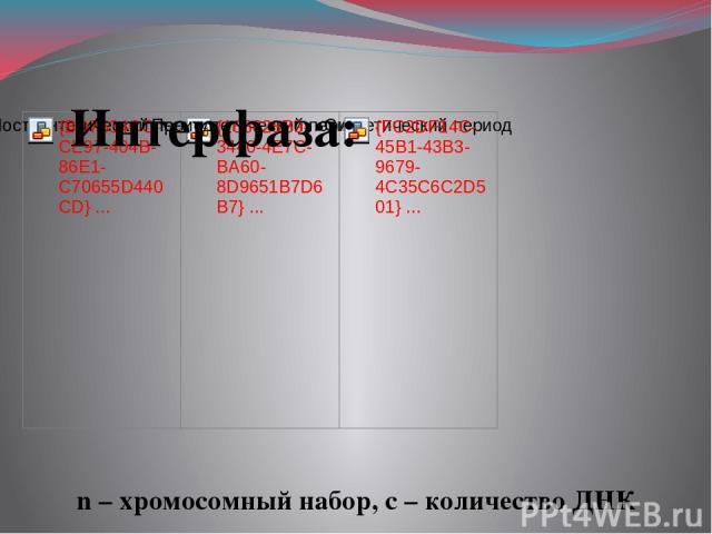Интерфаза: n – хромосомный набор, с – количество ДНК