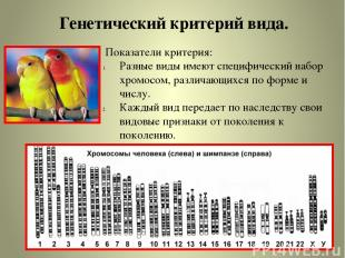 Генетический критерий вида. Показатели критерия: Разные виды имеют специфический
